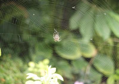 PhotoClub_Spider-Web